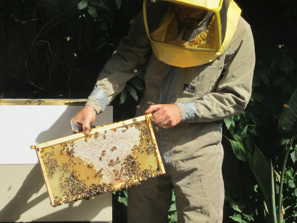 introduction to backyard beekeeping permaculture victoria